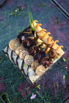 Stage champignons (Ecole de cuisine)